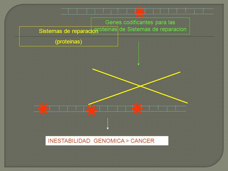 Genes codificantes para las proteinas de Sistemas de reparacion