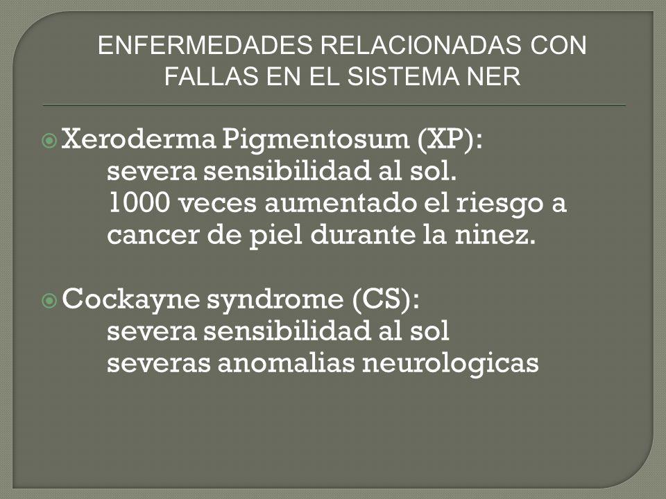 ENFERMEDADES RELACIONADAS CON FALLAS EN EL SISTEMA NER