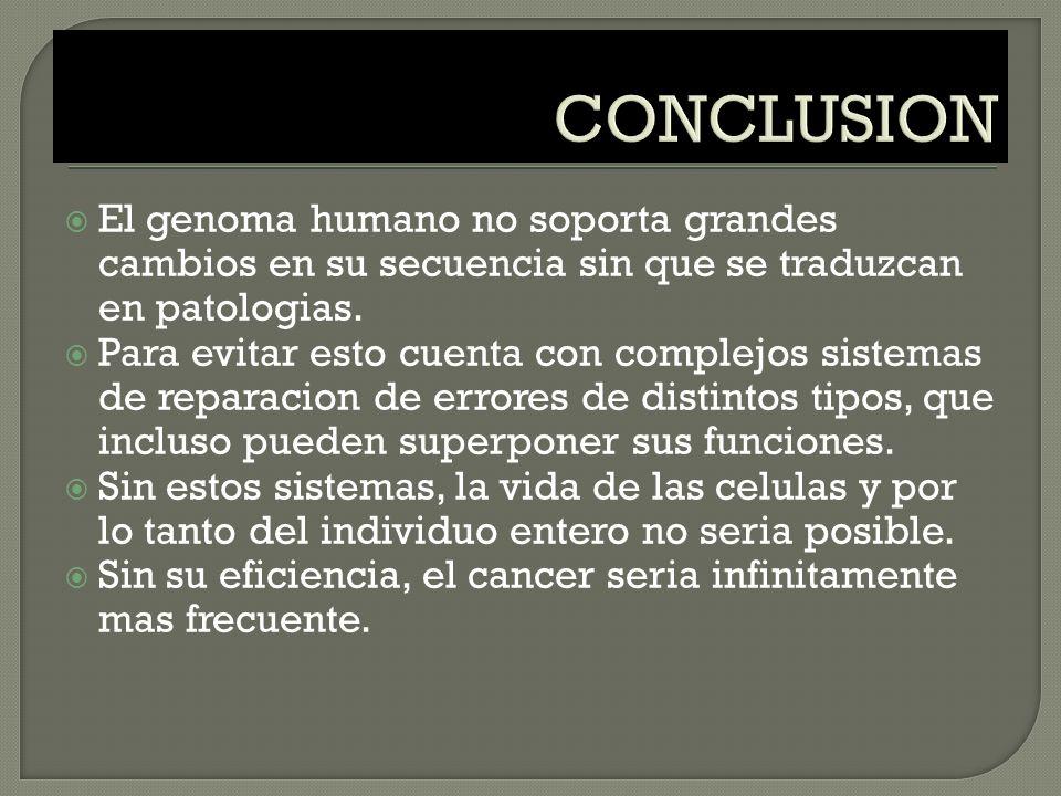 CONCLUSION El genoma humano no soporta grandes cambios en su secuencia sin que se traduzcan en patologias.
