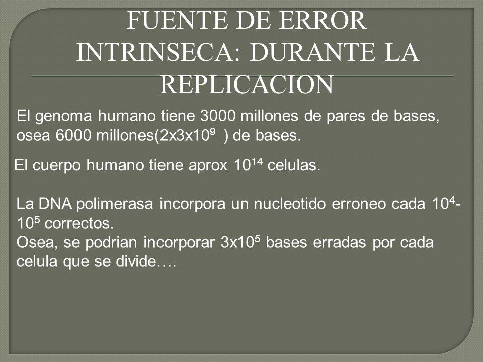 FUENTE DE ERROR INTRINSECA: DURANTE LA REPLICACION