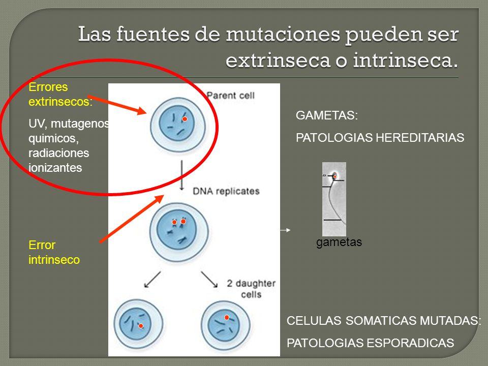 Las fuentes de mutaciones pueden ser extrinseca o intrinseca.