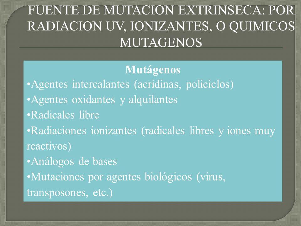 LA TASA OBSERVADA: DEPENDE DE LA EXPOSICION A RADIACIONES Y MUTAGENOS.