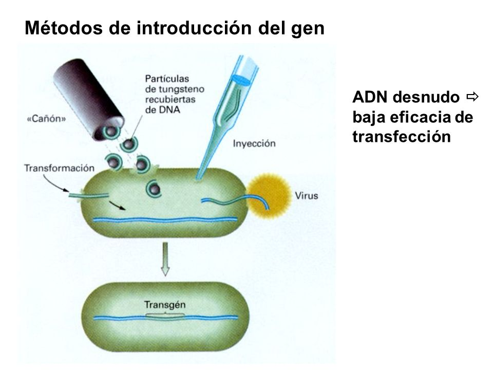 Métodos de introducción del gen