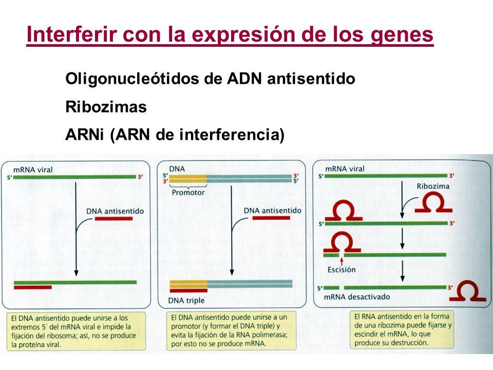 Interferir con la expresión de los genes