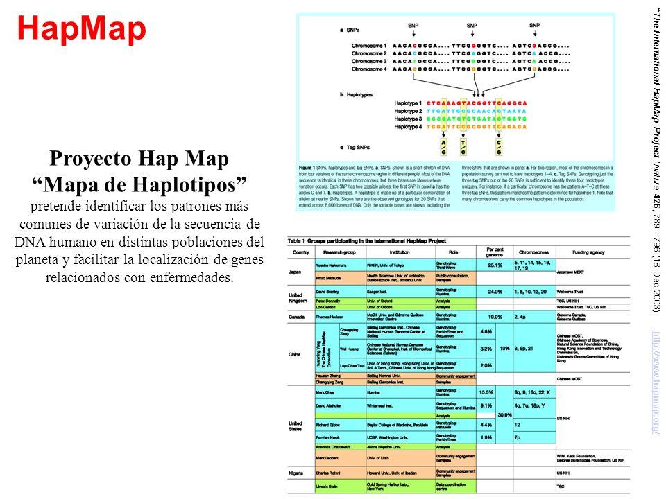 HapMap Proyecto Hap Map Mapa de Haplotipos