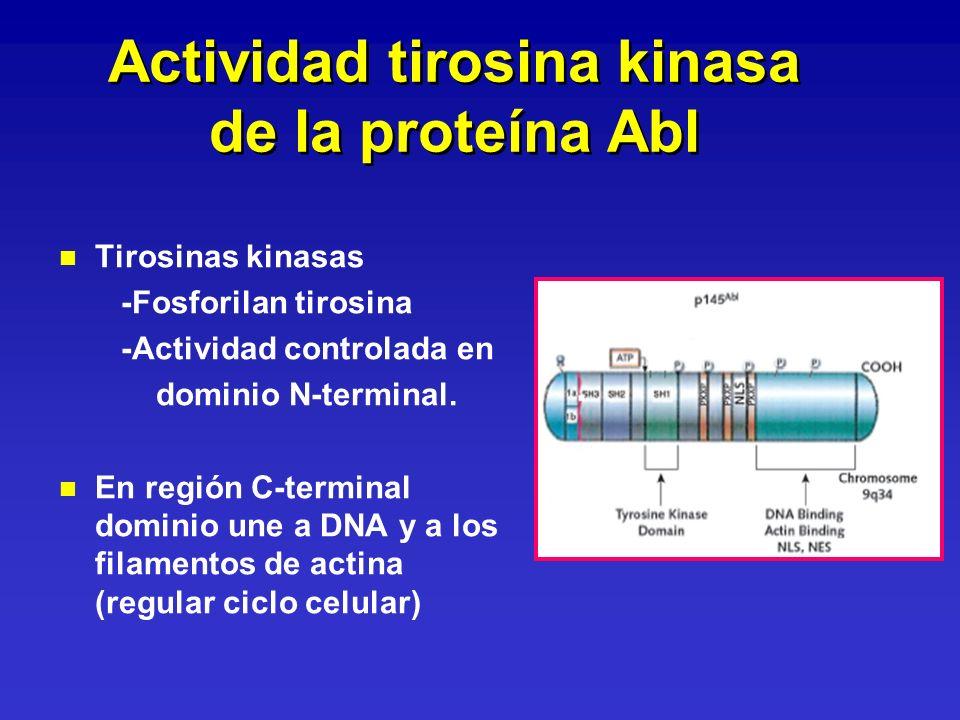 Actividad tirosina kinasa de la proteína Abl