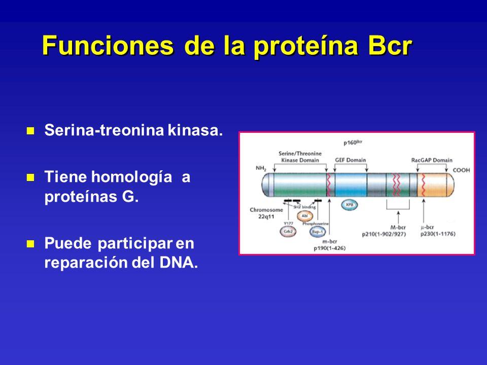 Funciones de la proteína Bcr
