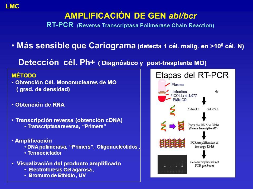 AMPLIFICACIÓN DE GEN abl/bcr