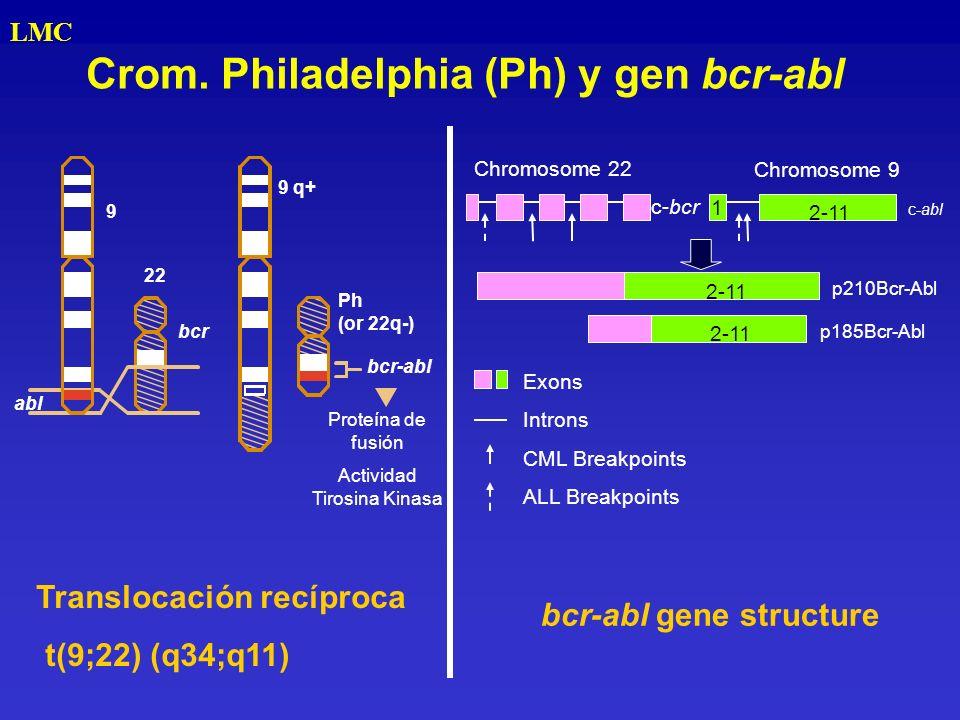 Crom. Philadelphia (Ph) y gen bcr-abl