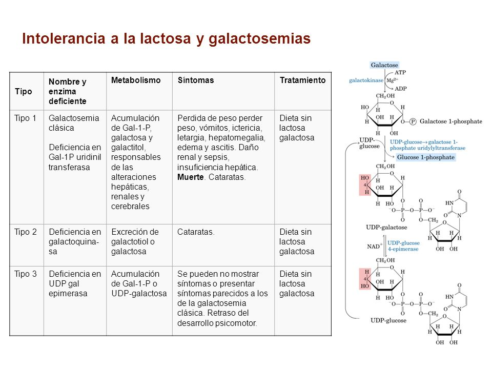 Intolerancia a la lactosa y galactosemias