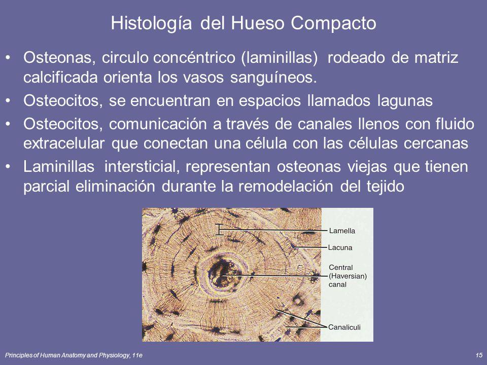 Histología del Hueso Compacto