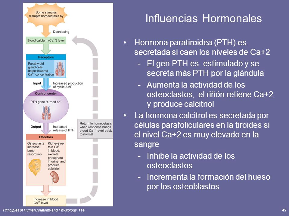 Influencias Hormonales