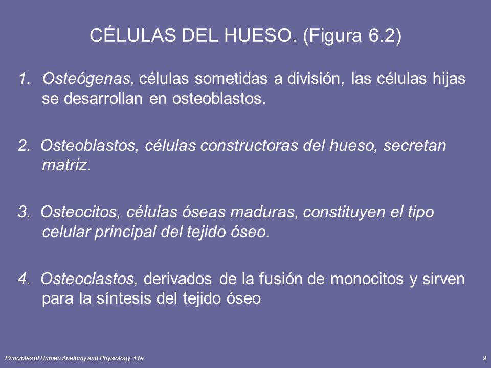 CÉLULAS DEL HUESO. (Figura 6.2)