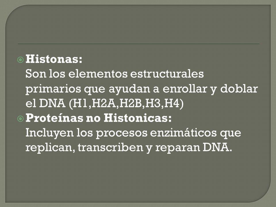 Histonas: Son los elementos estructurales primarios que ayudan a enrollar y doblar el DNA (H1,H2A,H2B,H3,H4)