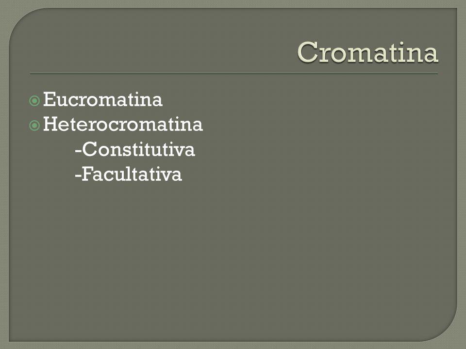 Cromatina Eucromatina Heterocromatina -Constitutiva -Facultativa