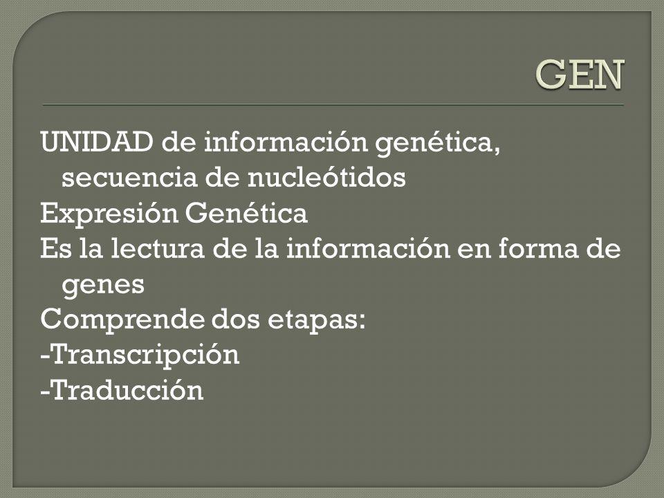 GEN UNIDAD de información genética, secuencia de nucleótidos