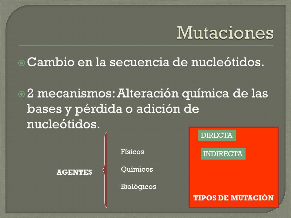 Mutaciones Cambio en la secuencia de nucleótidos.