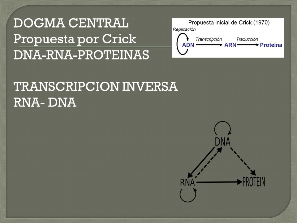 DOGMA CENTRAL Propuesta por Crick DNA-RNA-PROTEINAS TRANSCRIPCION INVERSA RNA- DNA