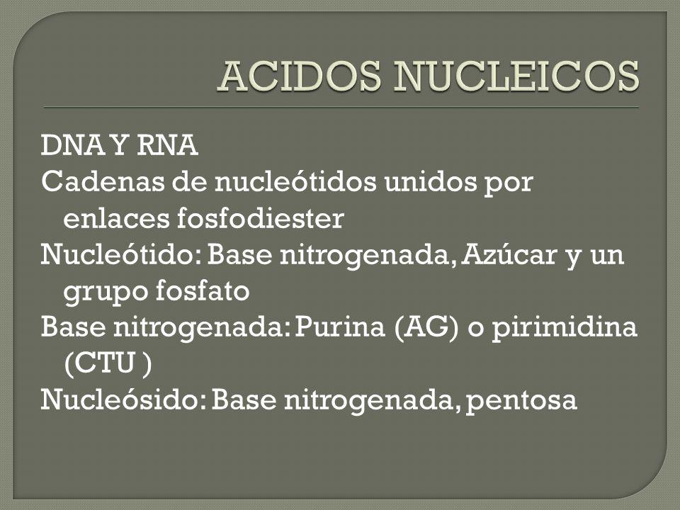 ACIDOS NUCLEICOS DNA Y RNA