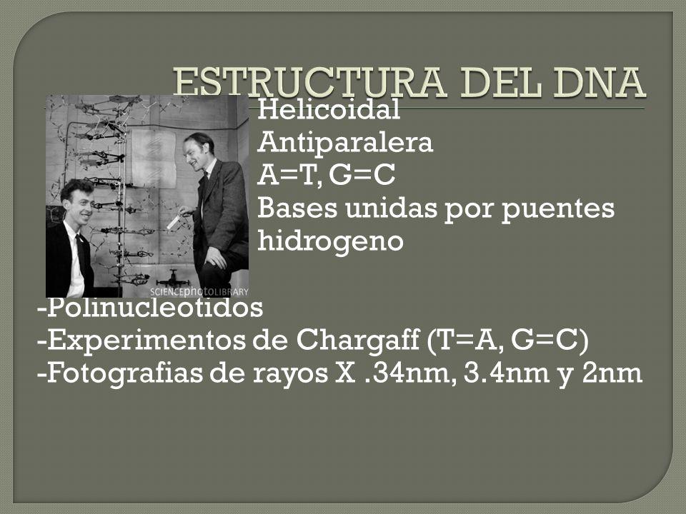 ESTRUCTURA DEL DNA Helicoidal Antiparalera A=T, G=C