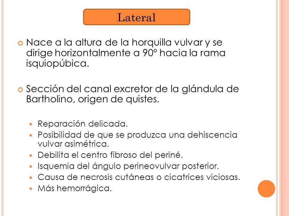 Lateral Nace a la altura de la horquilla vulvar y se dirige horizontalmente a 90º hacia la rama isquiopúbica.