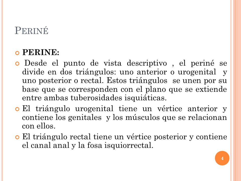 Periné PERINE: