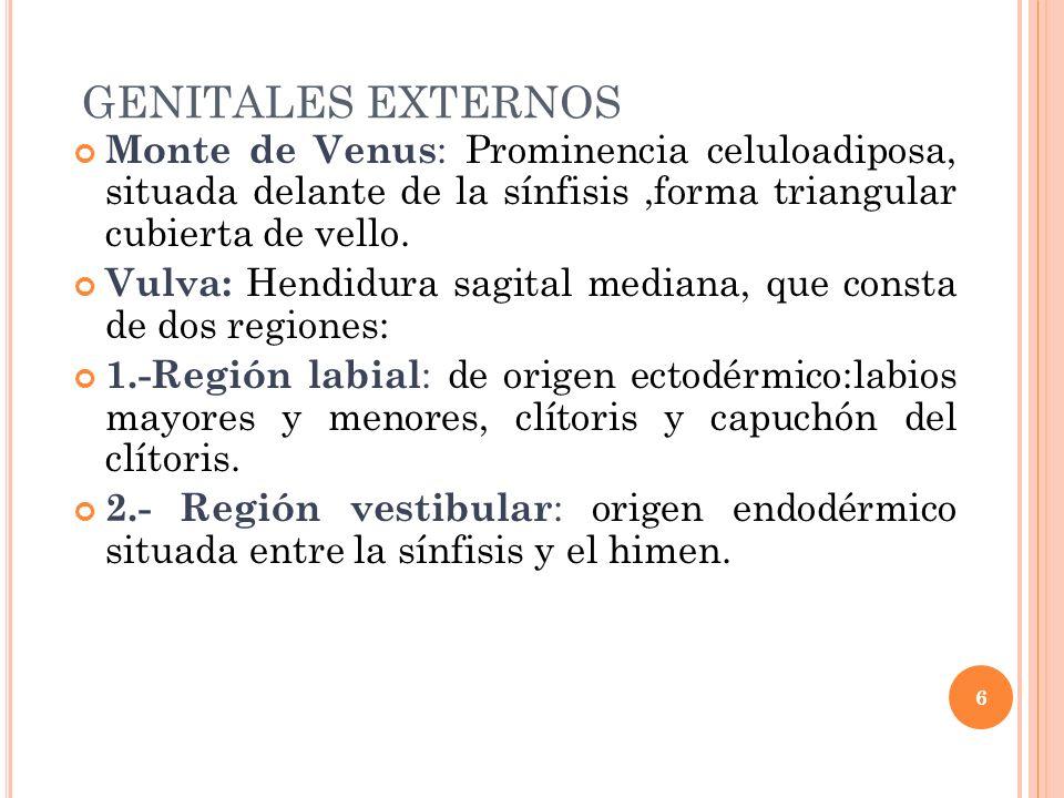 GENITALES EXTERNOS Monte de Venus: Prominencia celuloadiposa, situada delante de la sínfisis ,forma triangular cubierta de vello.
