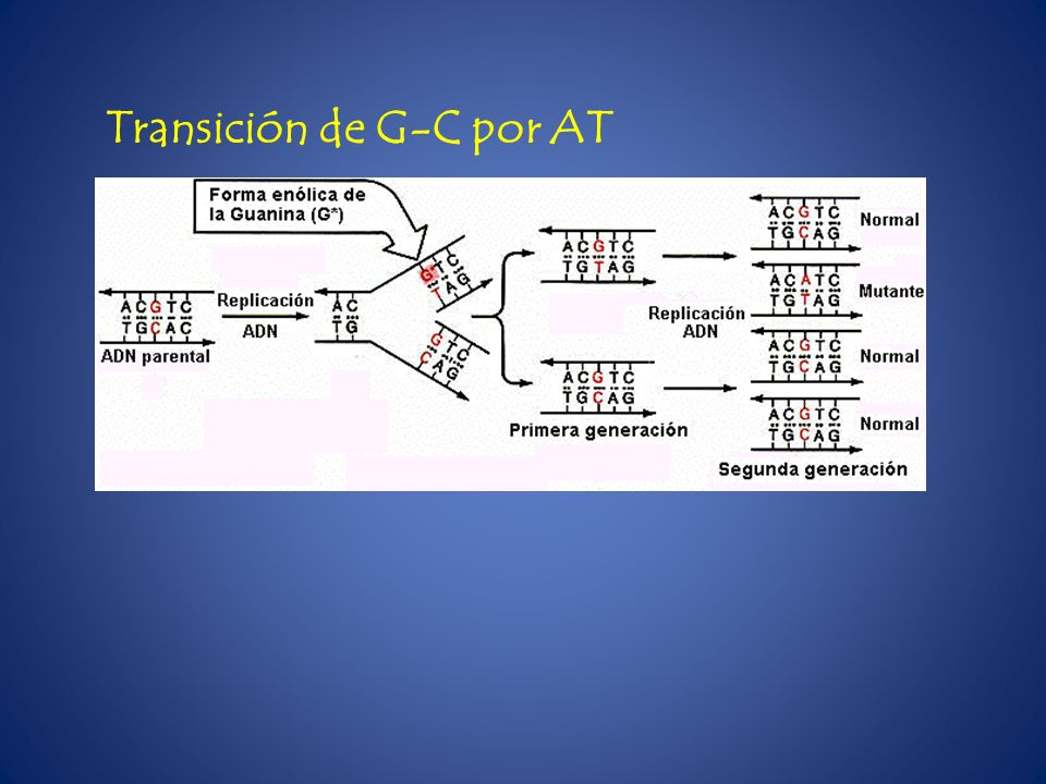 Transición de G-C por AT