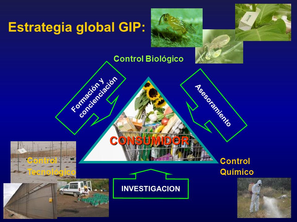 Estrategia global GIP:
