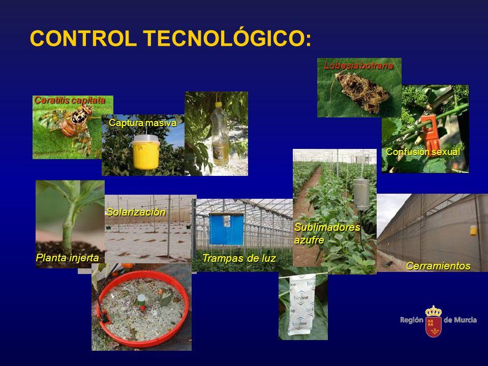 CONTROL TECNOLÓGICO: Solarización Sublimadores azufre Planta injerta