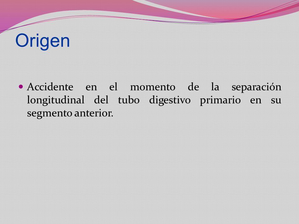 Origen Accidente en el momento de la separación longitudinal del tubo digestivo primario en su segmento anterior.