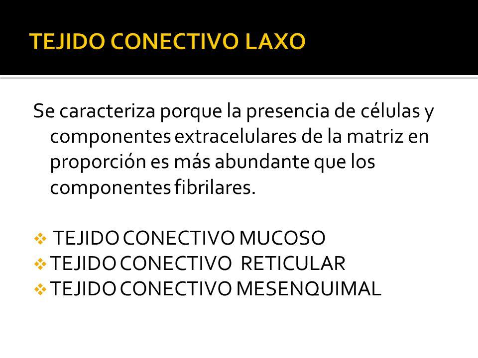 TEJIDO CONECTIVO LAXO