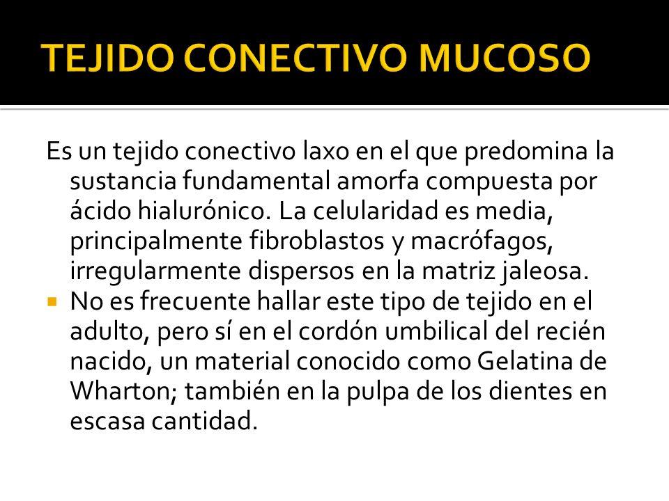 TEJIDO CONECTIVO MUCOSO