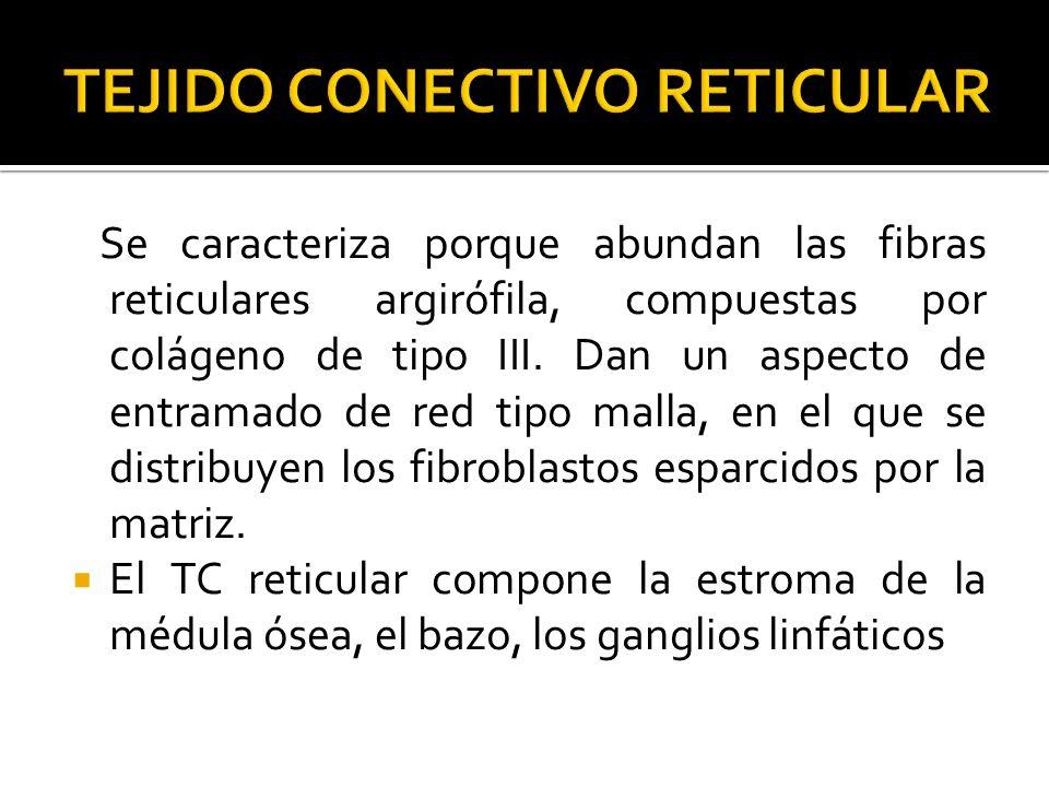 TEJIDO CONECTIVO RETICULAR