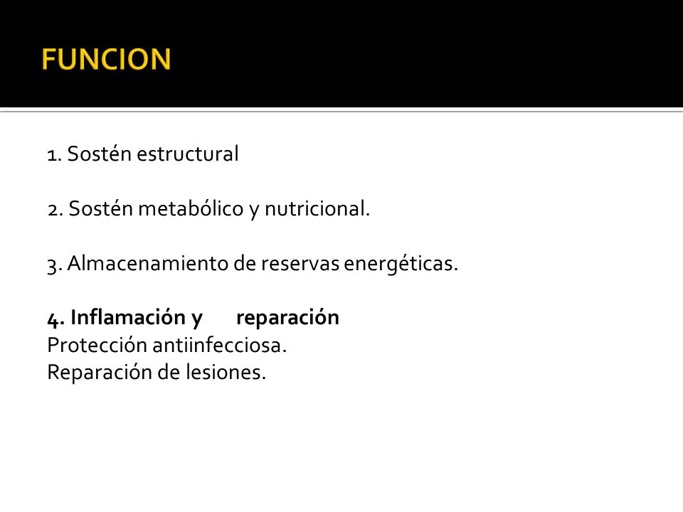 FUNCION 1. Sostén estructural 2. Sostén metabólico y nutricional.