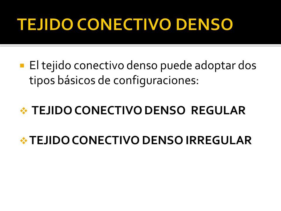 TEJIDO CONECTIVO DENSO