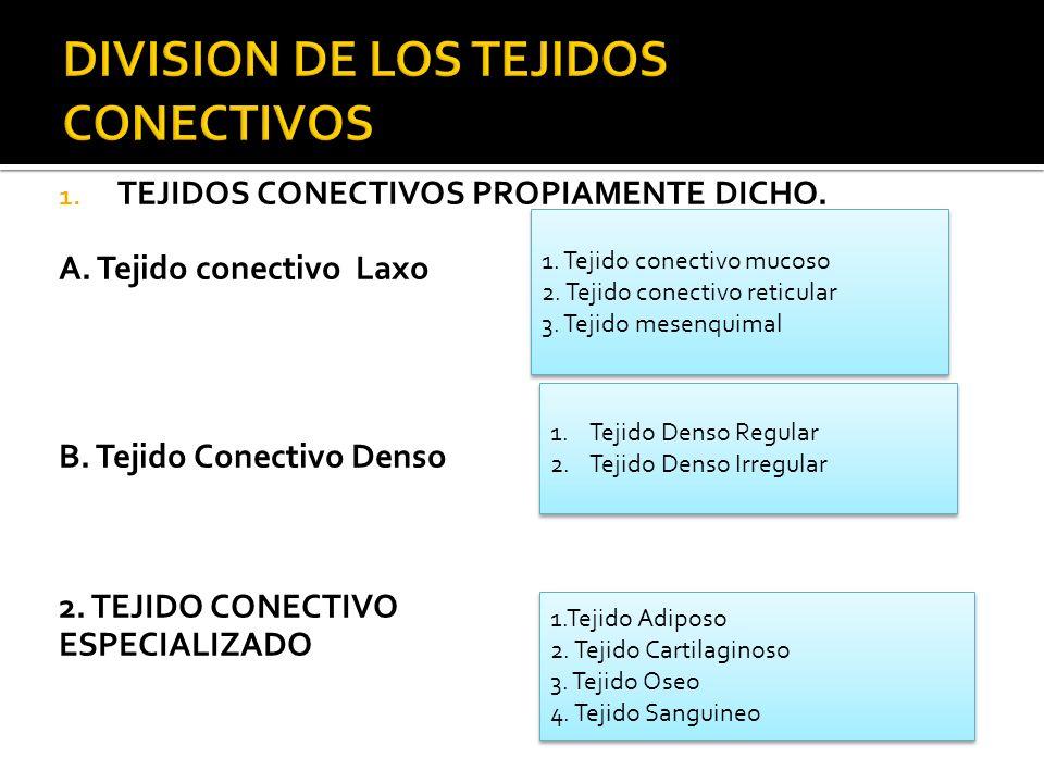 DIVISION DE LOS TEJIDOS CONECTIVOS