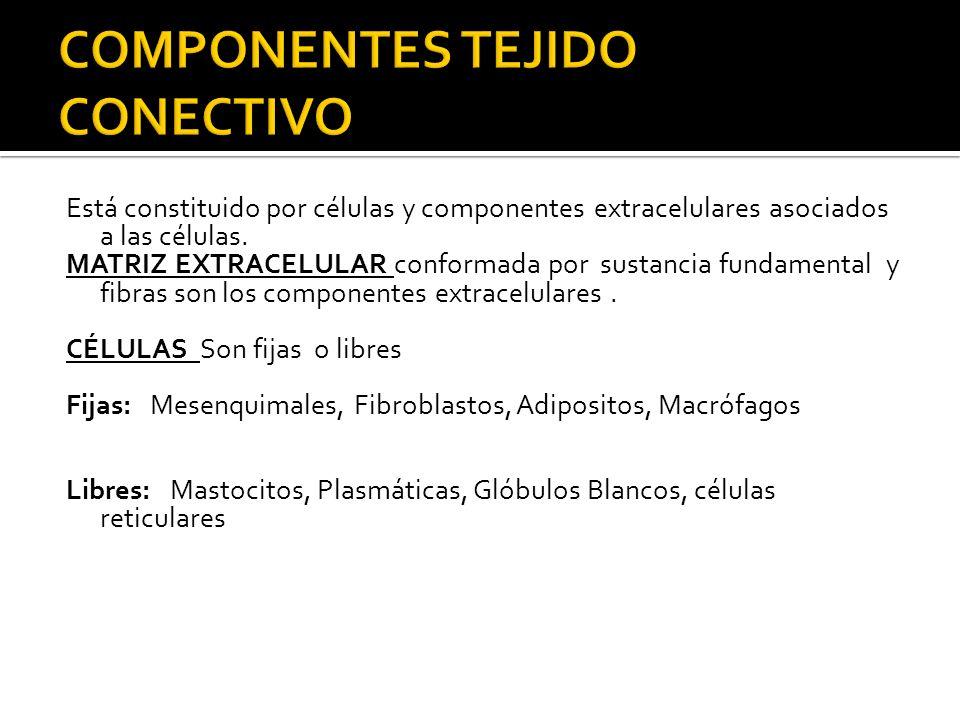 COMPONENTES TEJIDO CONECTIVO
