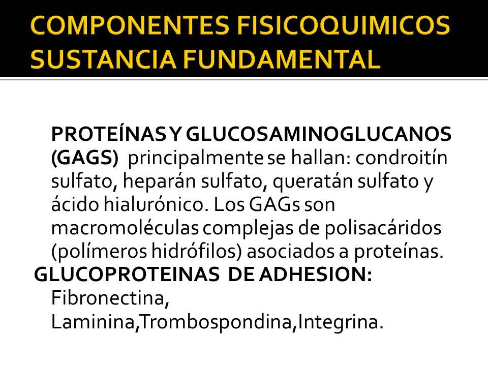COMPONENTES FISICOQUIMICOS SUSTANCIA FUNDAMENTAL