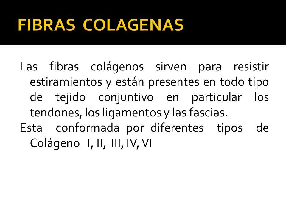 FIBRAS COLAGENAS