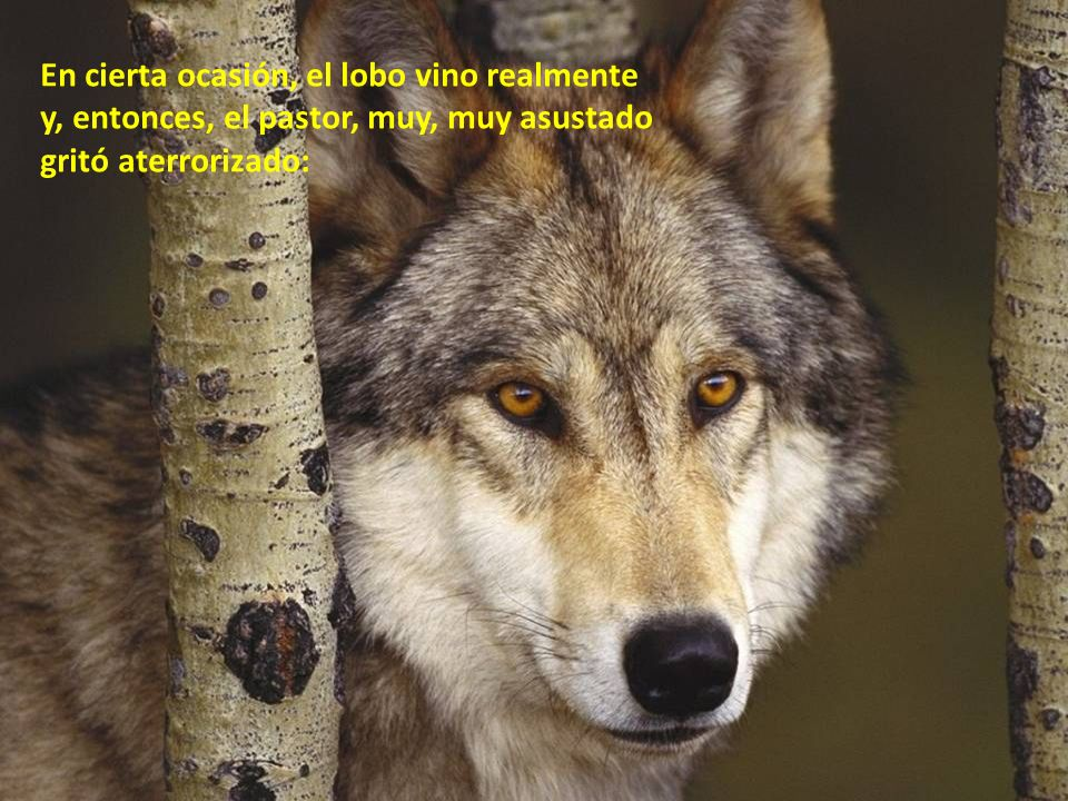 En cierta ocasión, el lobo vino realmente