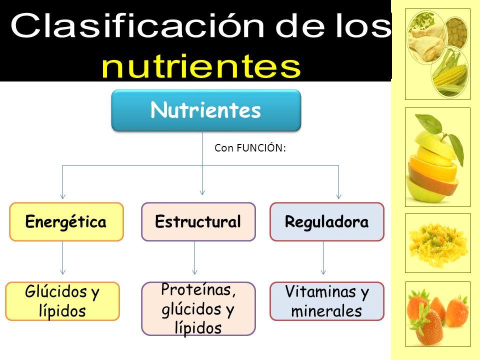 Proteínas, glúcidos y lípidos