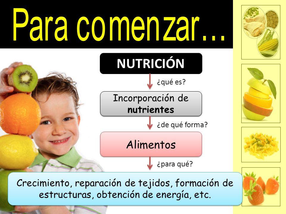 Incorporación de nutrientes