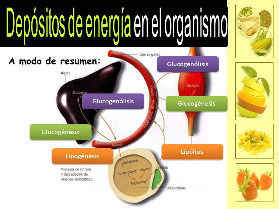 Depósitos de energía en el organismo
