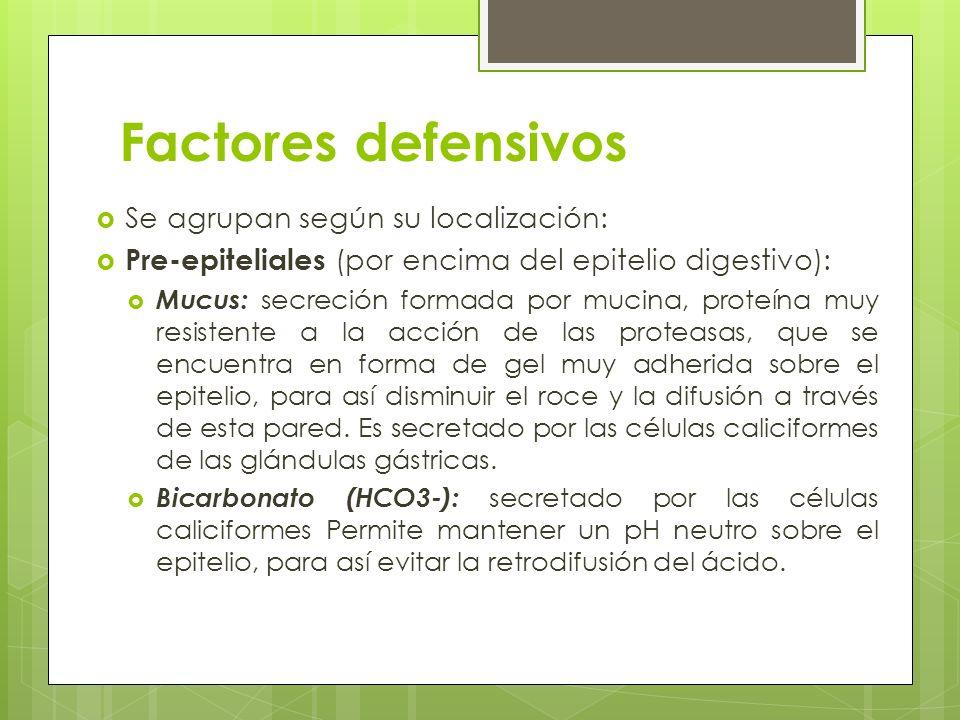 Factores defensivos Se agrupan según su localización: