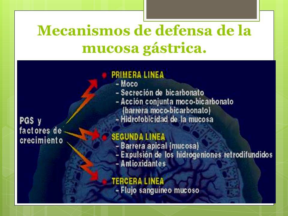 Mecanismos de defensa de la mucosa gástrica.