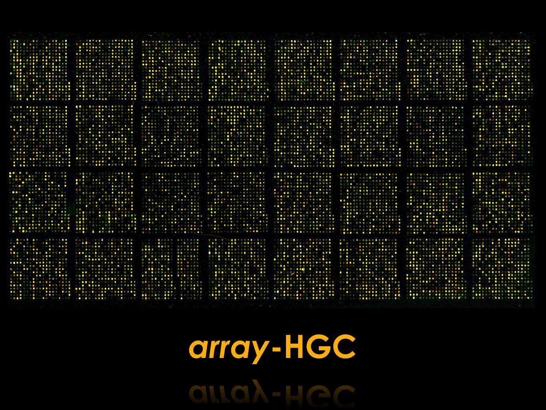 array-HGC
