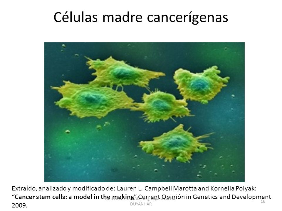 Células madre cancerígenas
