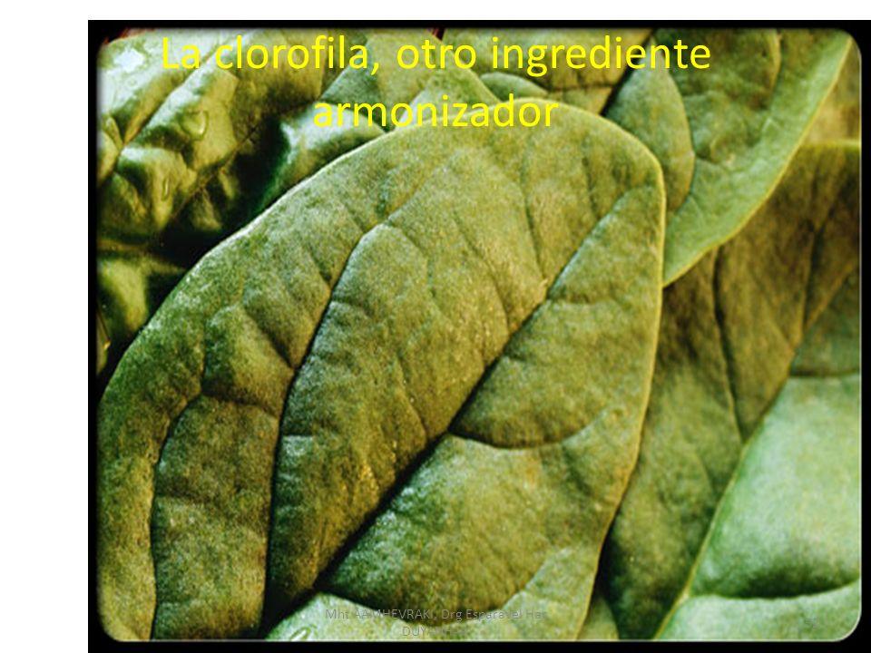 La clorofila, otro ingrediente armonizador