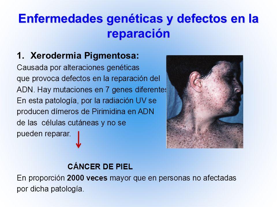Enfermedades genéticas y defectos en la reparación